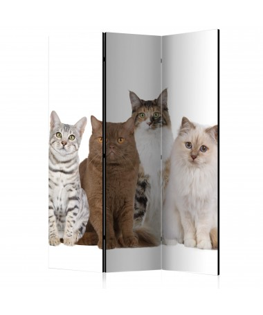 Paravento - Sweet Cats [Room Dividers]